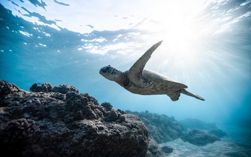 Après le lancement du projet régional «Survie des tortues marines» (STM) en Afrique de l'ouest par le Partenariat régional pour la conservation de la